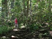 Top 10 Things to Do In Kauai, Hawaii   Climb Wailua Falls