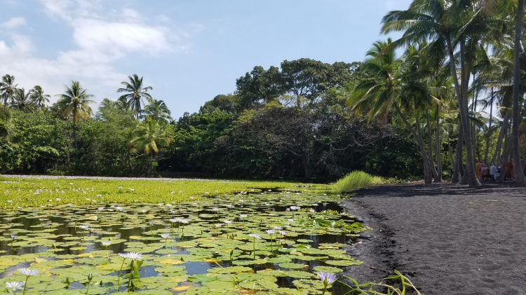 Hawaii Travel Guide | Big Island In a Day Tour | Punaluu Black Sand Beach Park