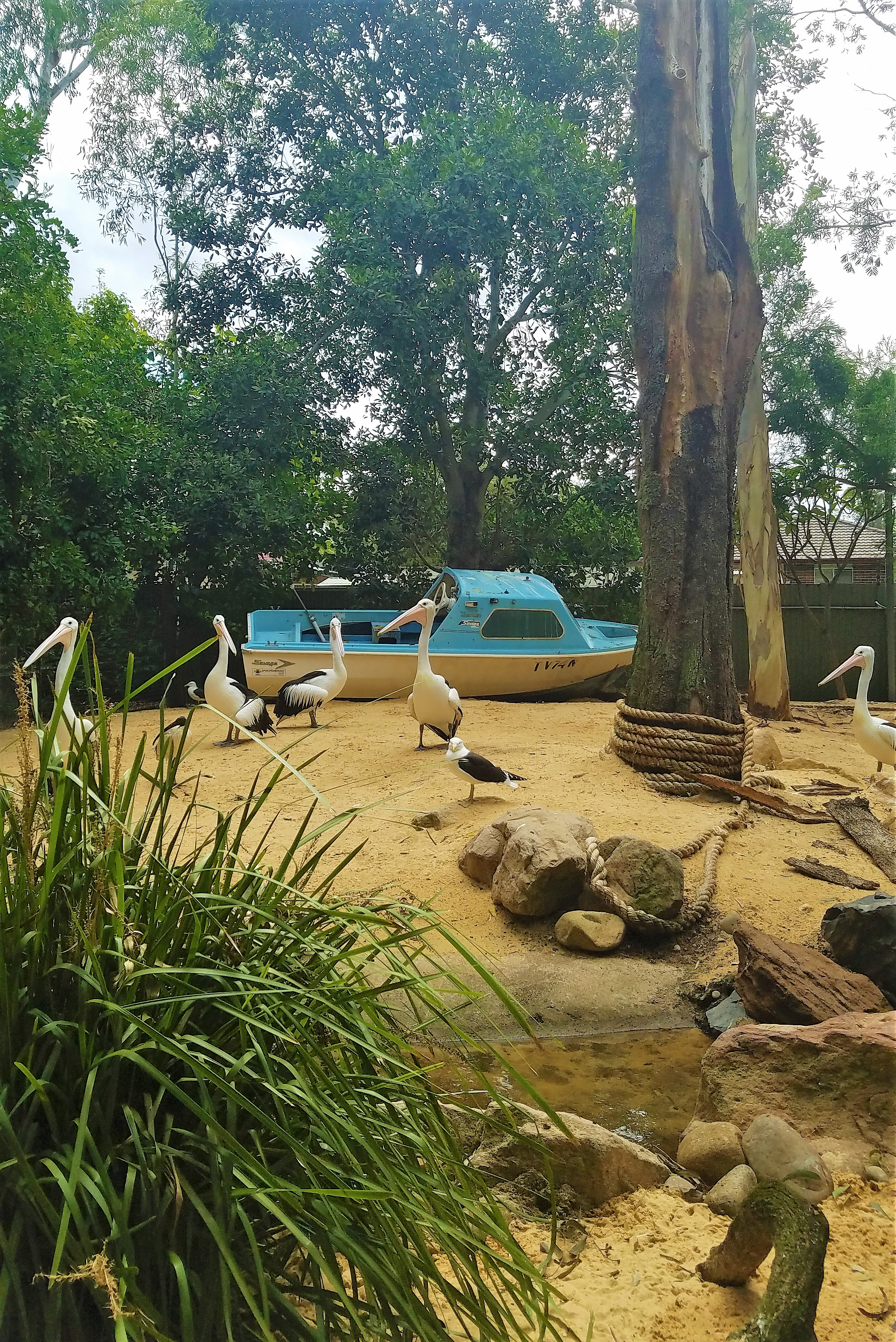 Australia Travel Guide | Featherdale Wildlife Park