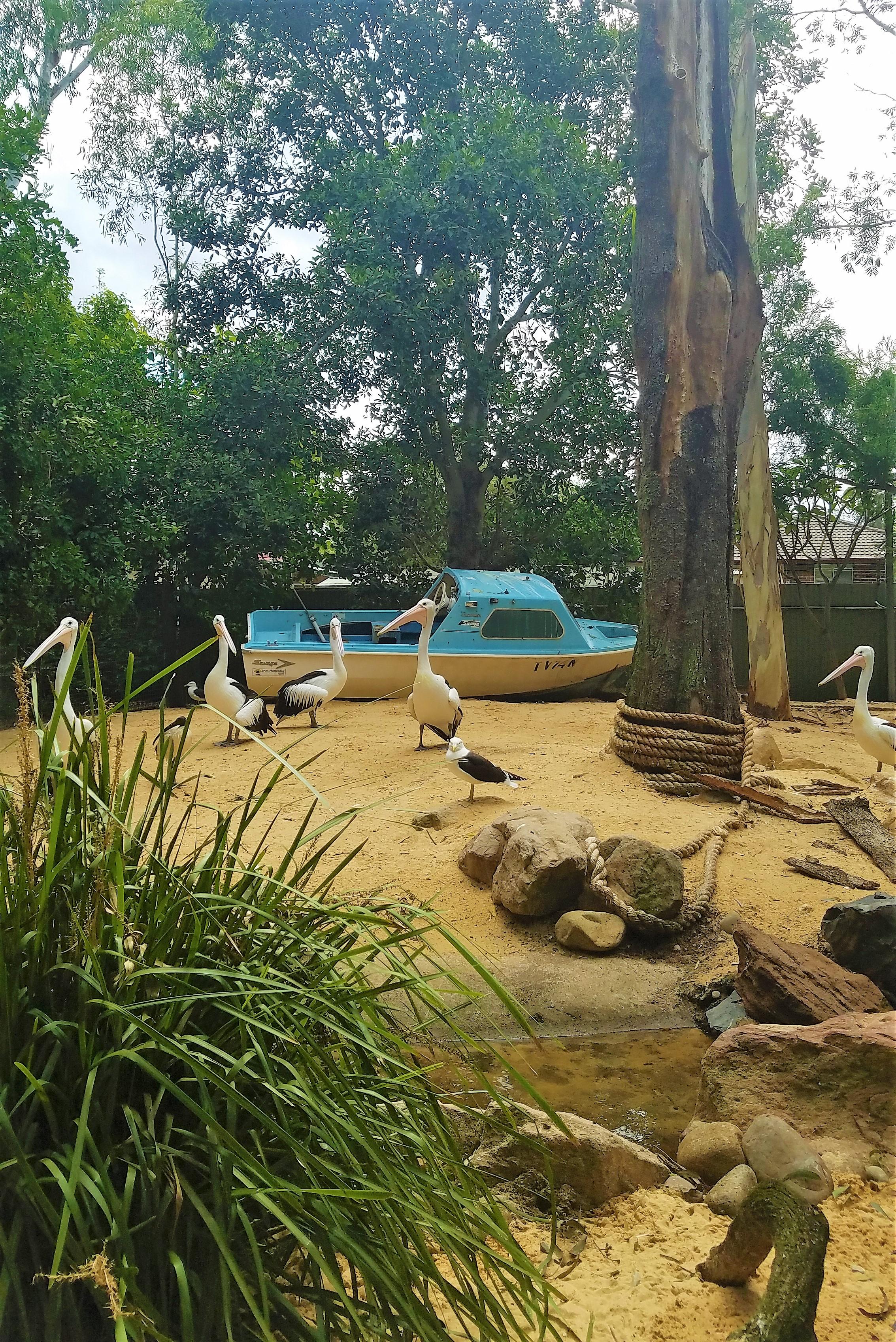 Australia Travel Guide | Featherdale Wildlife Park