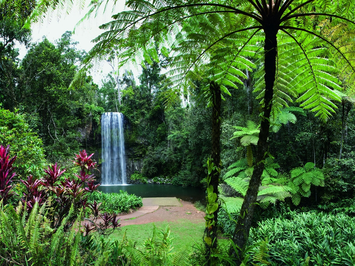 Australia Travel Guide | Atherton Tablelands | Millaa Millaa Falls