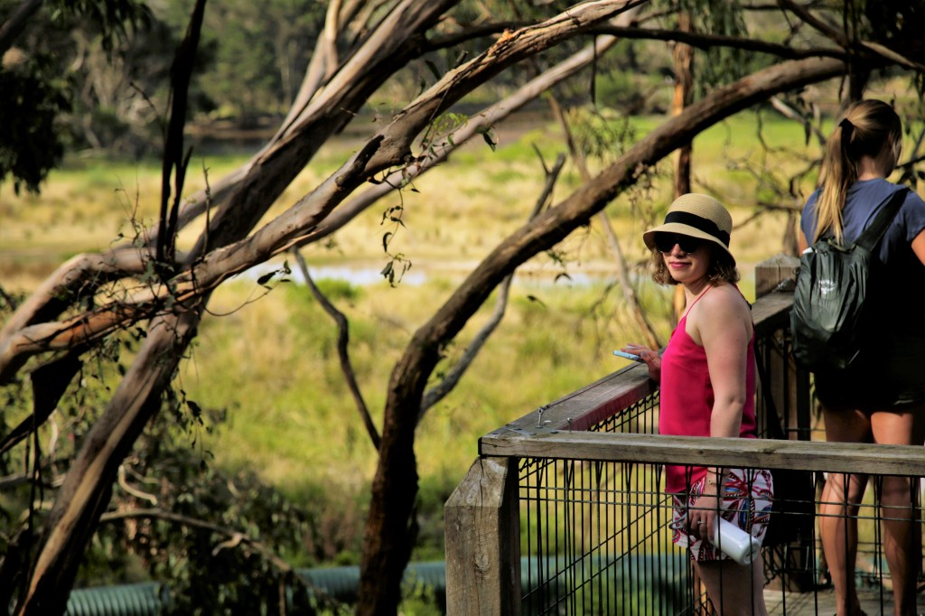 Australia Travel Guide | Phillip Island & Penguin Parade Half-Day Trip from Melbourne | Koala Conservation Centre