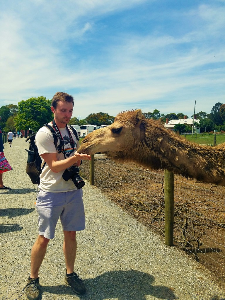 Australia Travel Guide | Phillip Island & Penguin Parade Half-Day Tour from Melbourne | Warrook Homestead